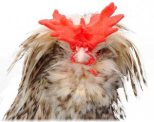 Photo Courtesy of www.poultrykeeper.com