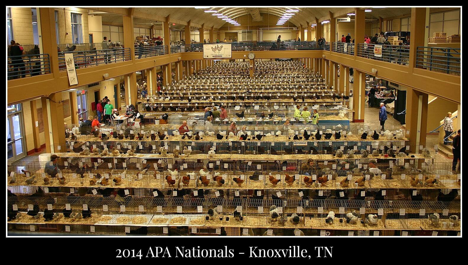 2014 APA Nationals