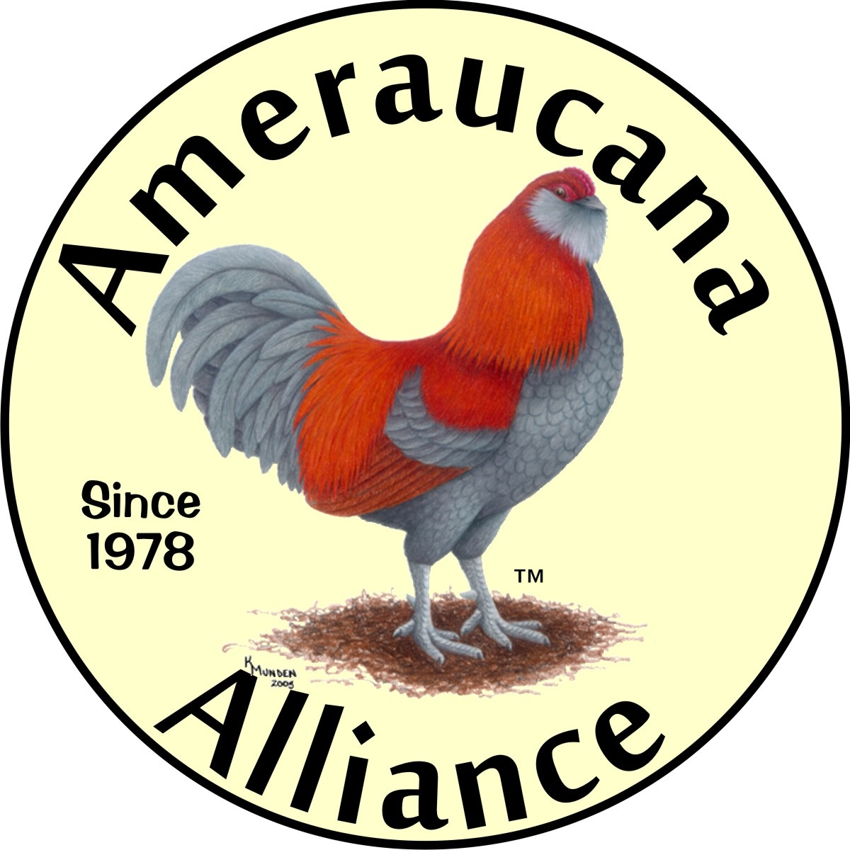Ameraucanas For Sale