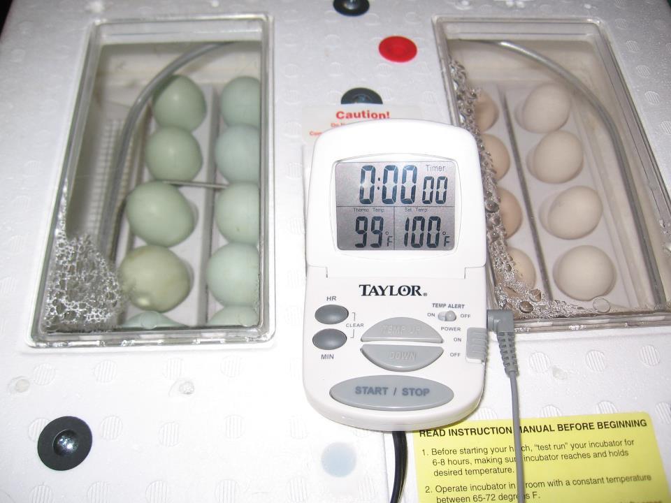 little giant still air incubator instructions