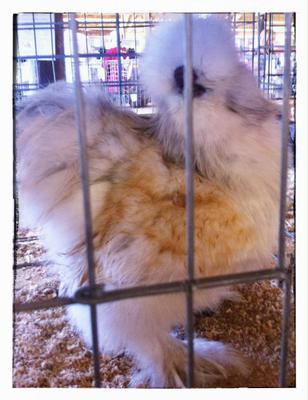 My Self Blue Cream Silkie