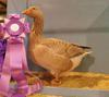 Reserve Champion Waterfowl Shawnee, 2011